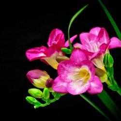 Цветы, рассада и саженцы
